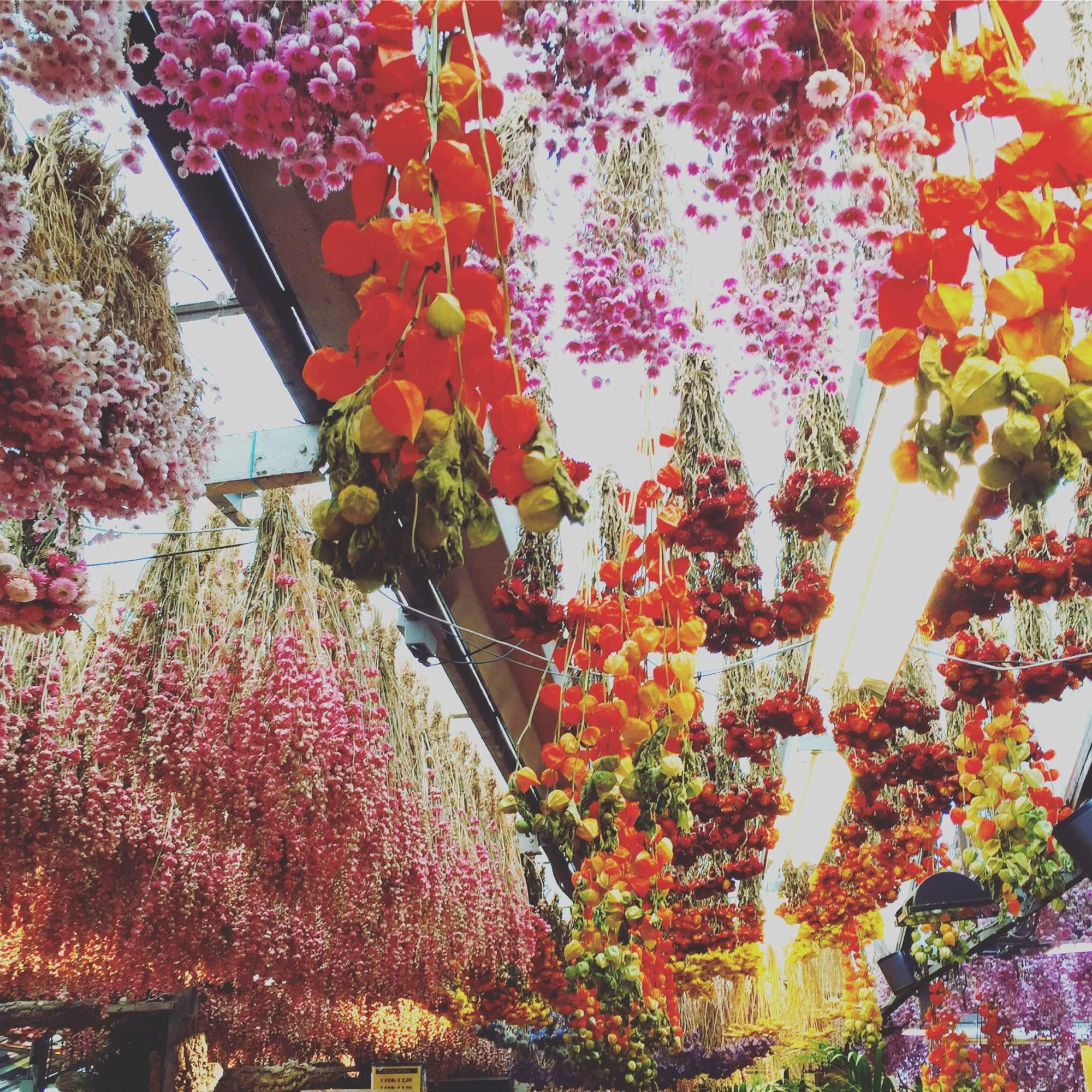 Bloemenmarket, the flower market in Amsterdam